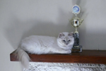Images/Queens/Birman_Trohpy_2012.jpg